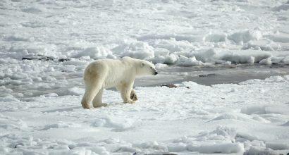 Jääkarhu kävelee jäätiköllä
