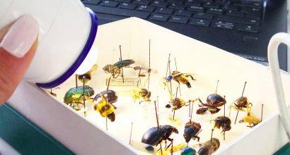 Hyönteisiä tutkitaan valon avulla