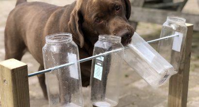 Koira nuuhkii läpinäkyviä pulloja