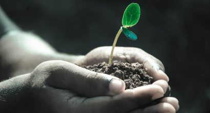 Vihreä taimi kasvaa mullasta, jota henkilö pitää käsissään