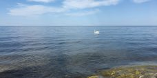 Itämerimaisema, jossa lipuu joutsen