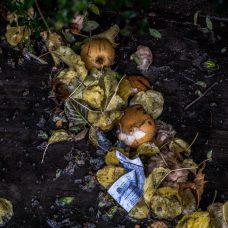 Kuvituskuvassa syksyistä roska-ainesta ja mädäntyneitä hedelmiä maassa