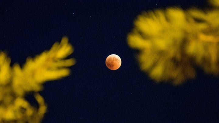 Punainen kuu taivaalla. Kuvan etualalla epätarkkana havupuiden oksia.