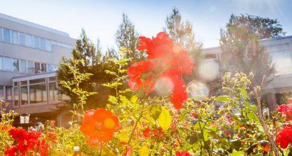 Kukkia Turun Yliopistonmäellä
