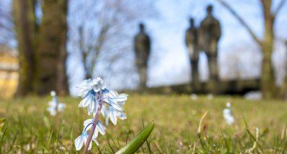 Kukkia yliopistonmäellä. Taustalla kolme vekkulia -patsas.